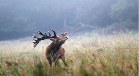 Raus in die Natur Fotoherbst zieht in Zingst ein