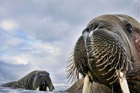 © Valter Bernadeschi - Wildlife Photographer of the Year