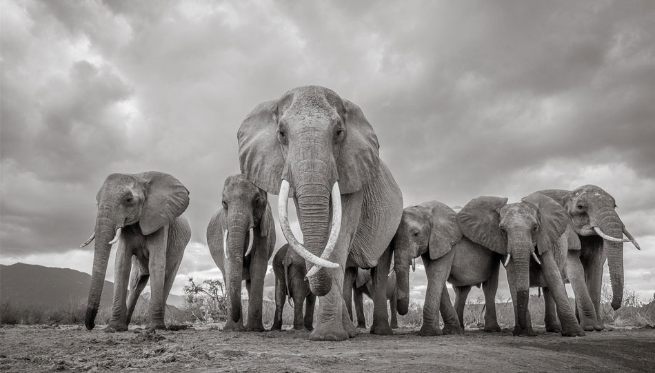 Sony World Photo Awards - Foto: Will Burrard-Lucas (UK)